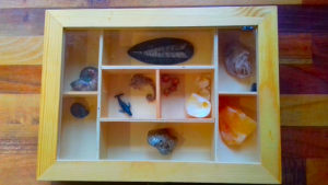 A photo graph of a wooden display case used for a gift for nature-loving children