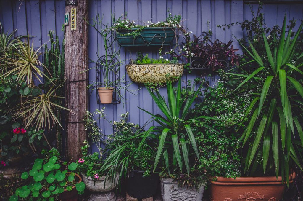 Plants hanging on a painted blue fence