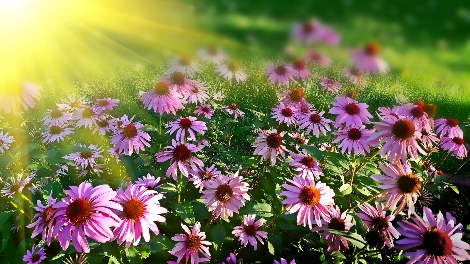 Pink flowers in the sunlight