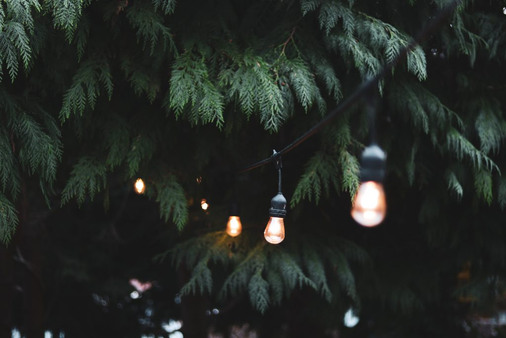 String of lights hanging in a tree